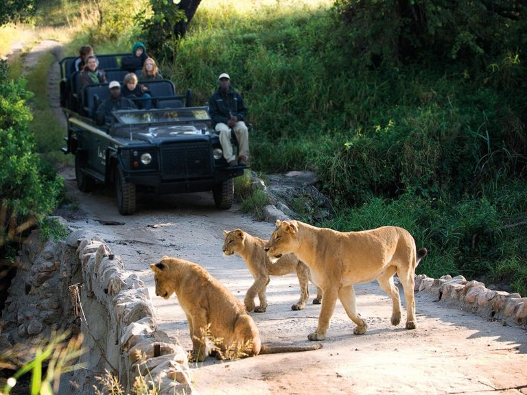 Love animals? Visit These 5 wildlife Resorts for a Thrilling Experience