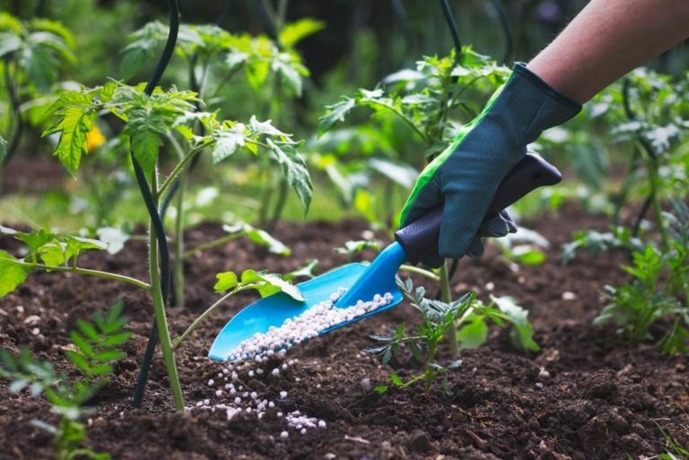 Increase Plant Growth With Bio Fertilizers